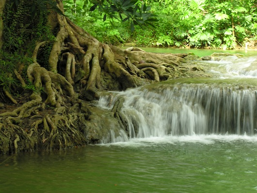 The water and roots seem to flow together.