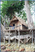 Photo of Treehouse