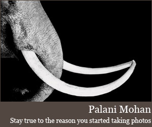 Interview with photographer Palani Mohan